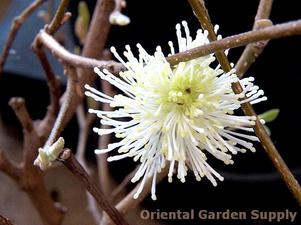 Oriental Garden Supply Photo Gallery Rochester NY Garden Center